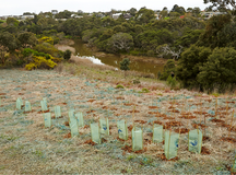 Quik Revegetation Spring Creek